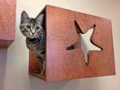 starfishcatperch