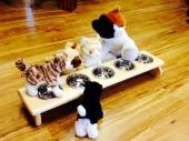 catfeeder